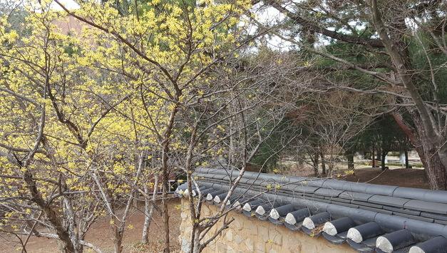 Do You Want to Enjoy Keimyung University Campus?